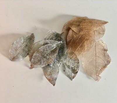 Small Skeleton leaves