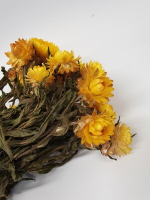 Dried Helechrysum Yellow