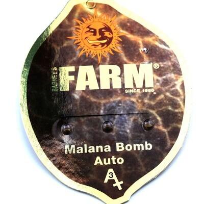 Auto Malana Bomb