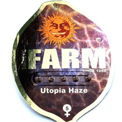 Utopia Haze