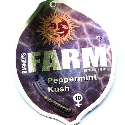 Peppermint Kush