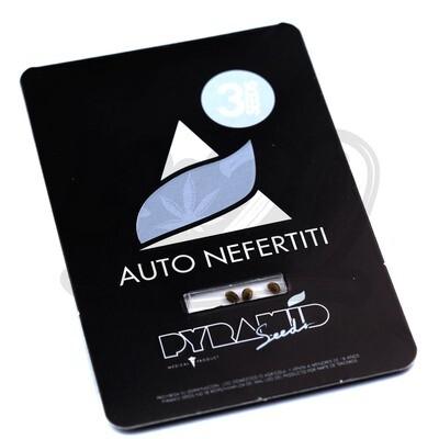 Auto Nefertiti