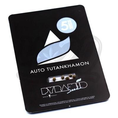Auto Tutankhamon