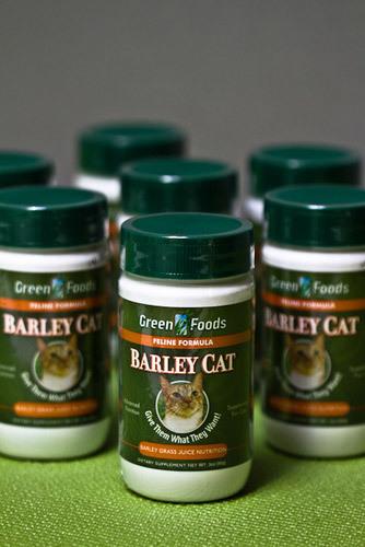 Barley Cat