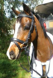Small pony Leather Bridle