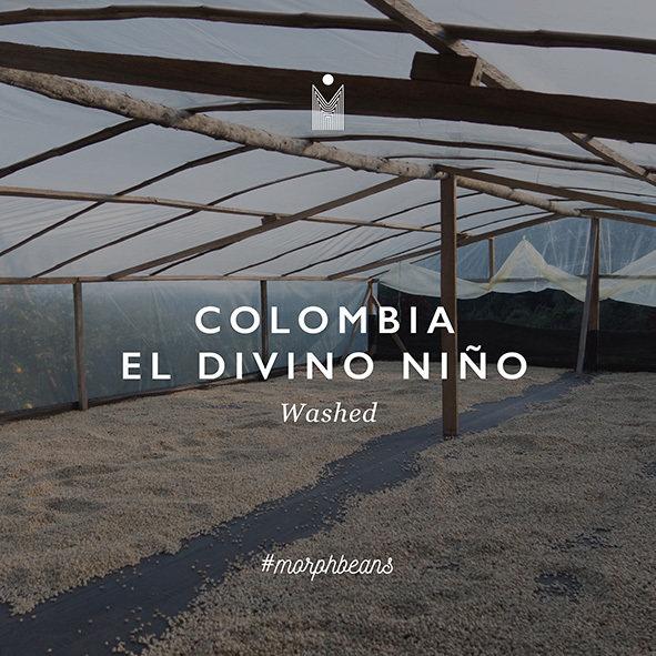 Colombia El Divino Niño | Washed