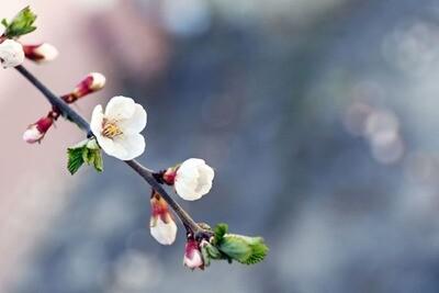 Frühlings-Weindegustation 24. & 25. März 2020 17:00 - 22:00 Zikadenweg 6 in 3006 Bern
