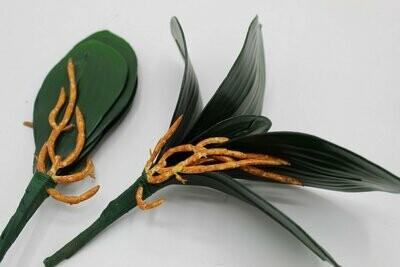Орхидей листья