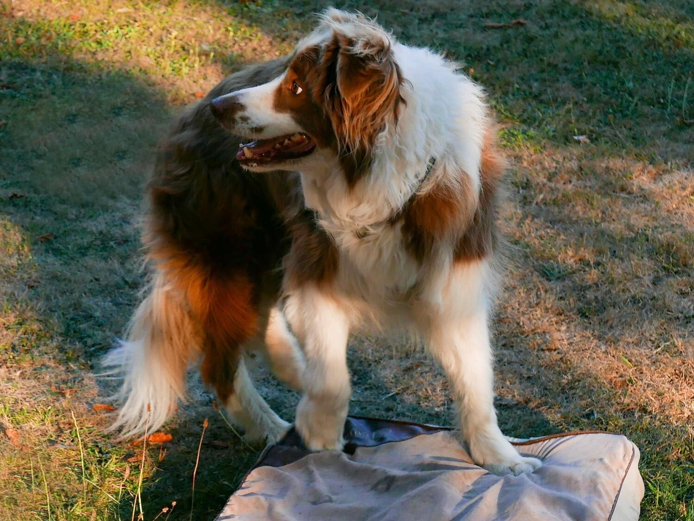 Canine Body Language - Southampton