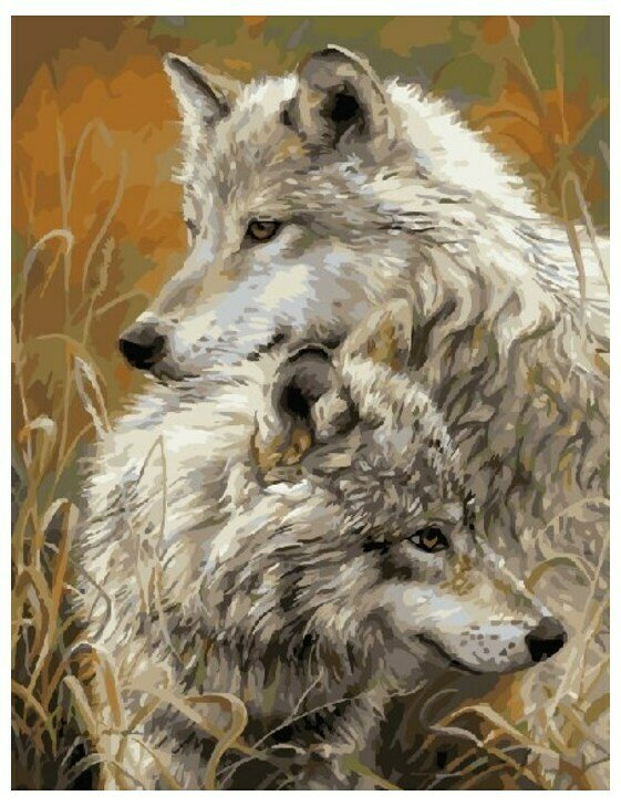 Картина по номерам GX 8873 Волчья пара 40*50