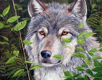 Картина по номерам 40х50 - Серый волк
