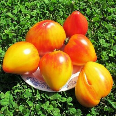 Помидоры Coeur de Zebre Apricot - Сердце Абрикосовой Зебры