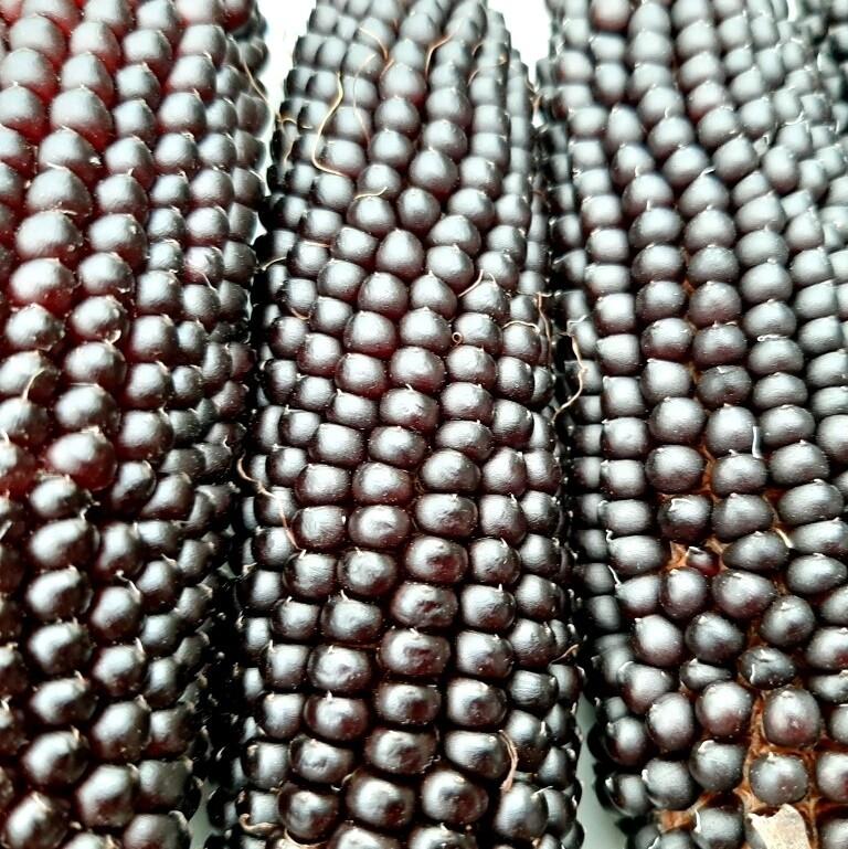 Кукуруза Чёрный Попкорн - Black Popcorn
