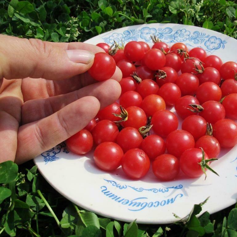 Дикие сладкие помидоры  Свит Пиа Розовые