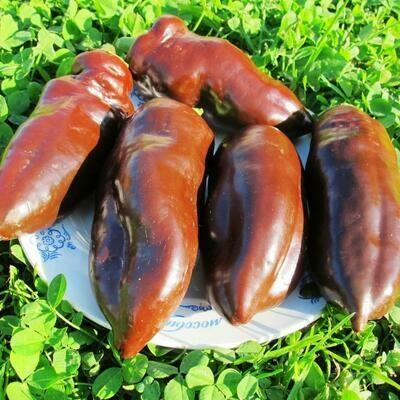 Перец Сладкий Шоколад - Sweet Chocolate Pepper