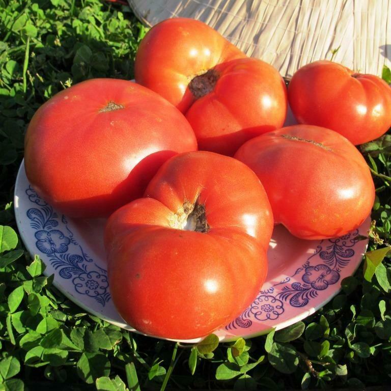 Помидоры Гном Розелла Гигант - Giant Dwarf Rosella Tomato