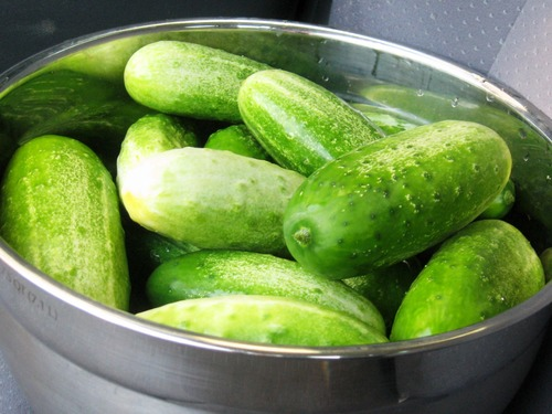 Огурец Early Russian Cucumber - Русский Ранний