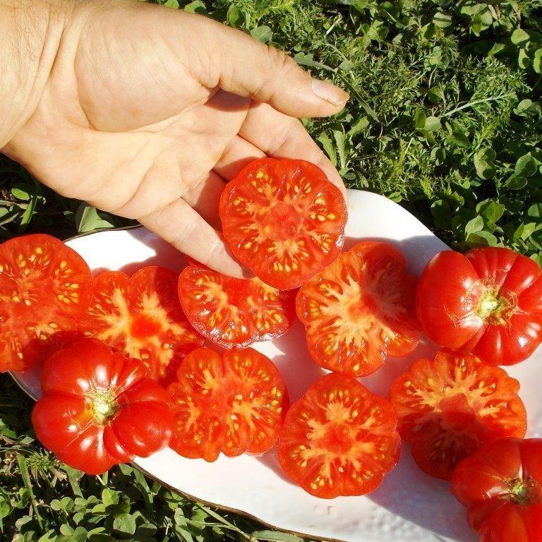 Помидоры С Острова Бали - Bali Tomato