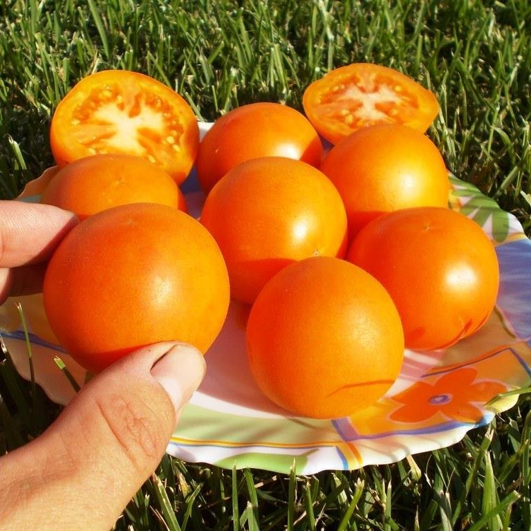 Помидоры Оранжевый Персик - Orange Peach Tomato