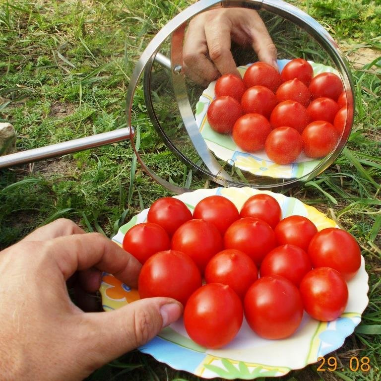 Помидоры Маленький Поцелуй Герани - Little Geranium Kiss Tomato
