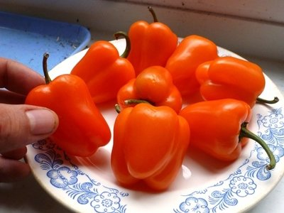 Перец Сладкий Mini Bell Orange - Мини Белл Оранжевый