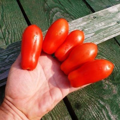 Помидоры Fingers of Naples - Дамские Пальчики из Неаполя