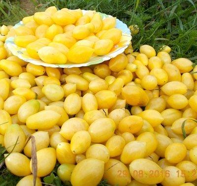 Помидоры Черри Сумасшедшие Ягоды - Bаrry's Crazy Cherry Tomato