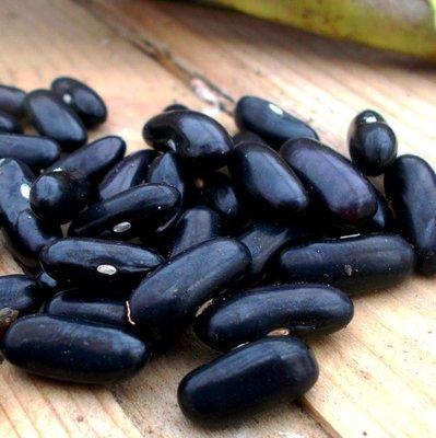 Фасоль Чёрная Кустовая Черокки -  Black Bush Cherokee Bean