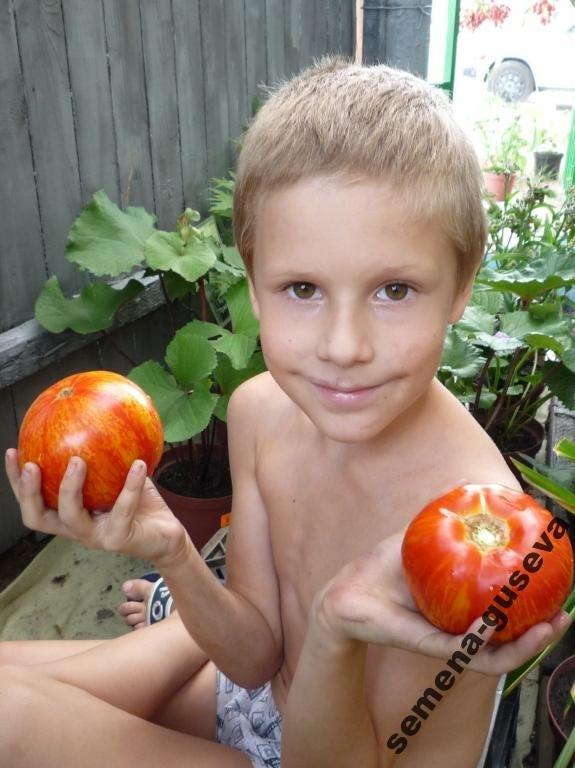 Помидоры Aviuri — Яблочный окрас