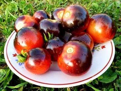 Помидоры - Blueberry Tomato - Черника