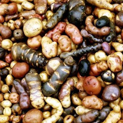 Картофель Дикий (Wild Potatoes) Смесь Сортов