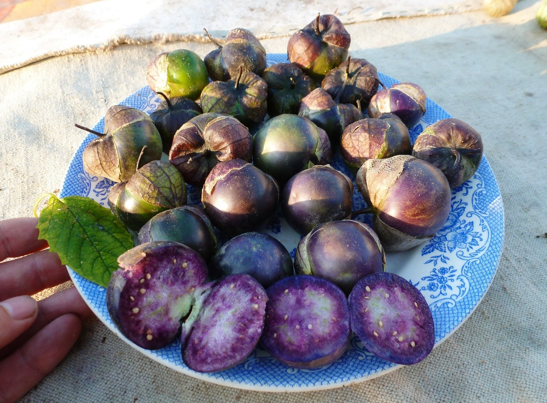Физалис Фиолетовый - Purple Tomatillo