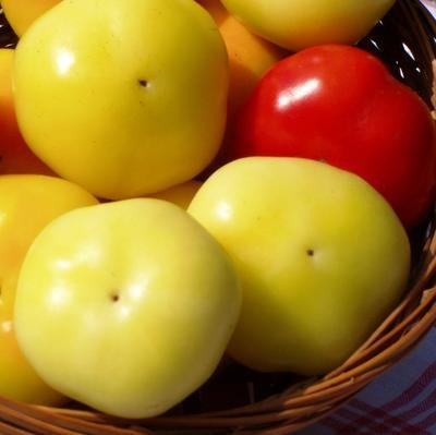 Венгерский белый перец – Alma Paprika