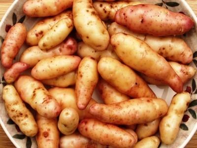 Картофель Дикий Аня - Wild Potatoes Anya  - (20 клубней)