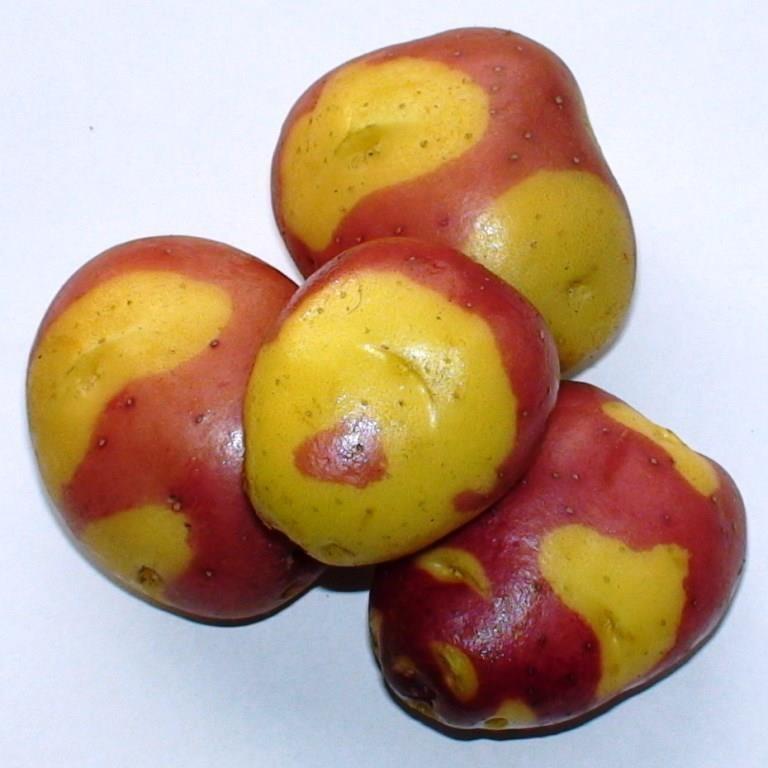 Картофель Выставочный (Exhibition Potato) Cмесь Cортов