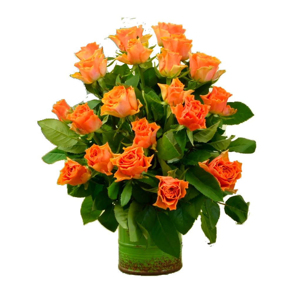 Oranžové ruže