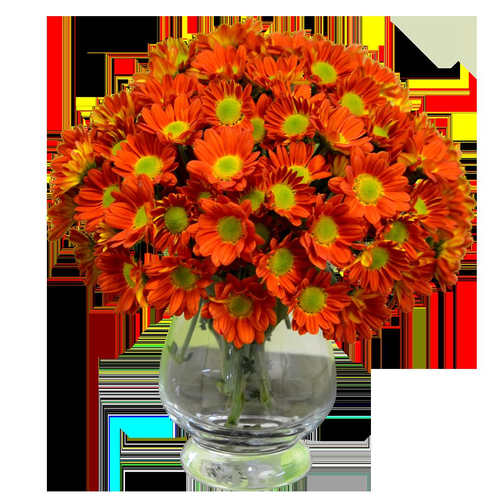 Oranžová chryzantéma