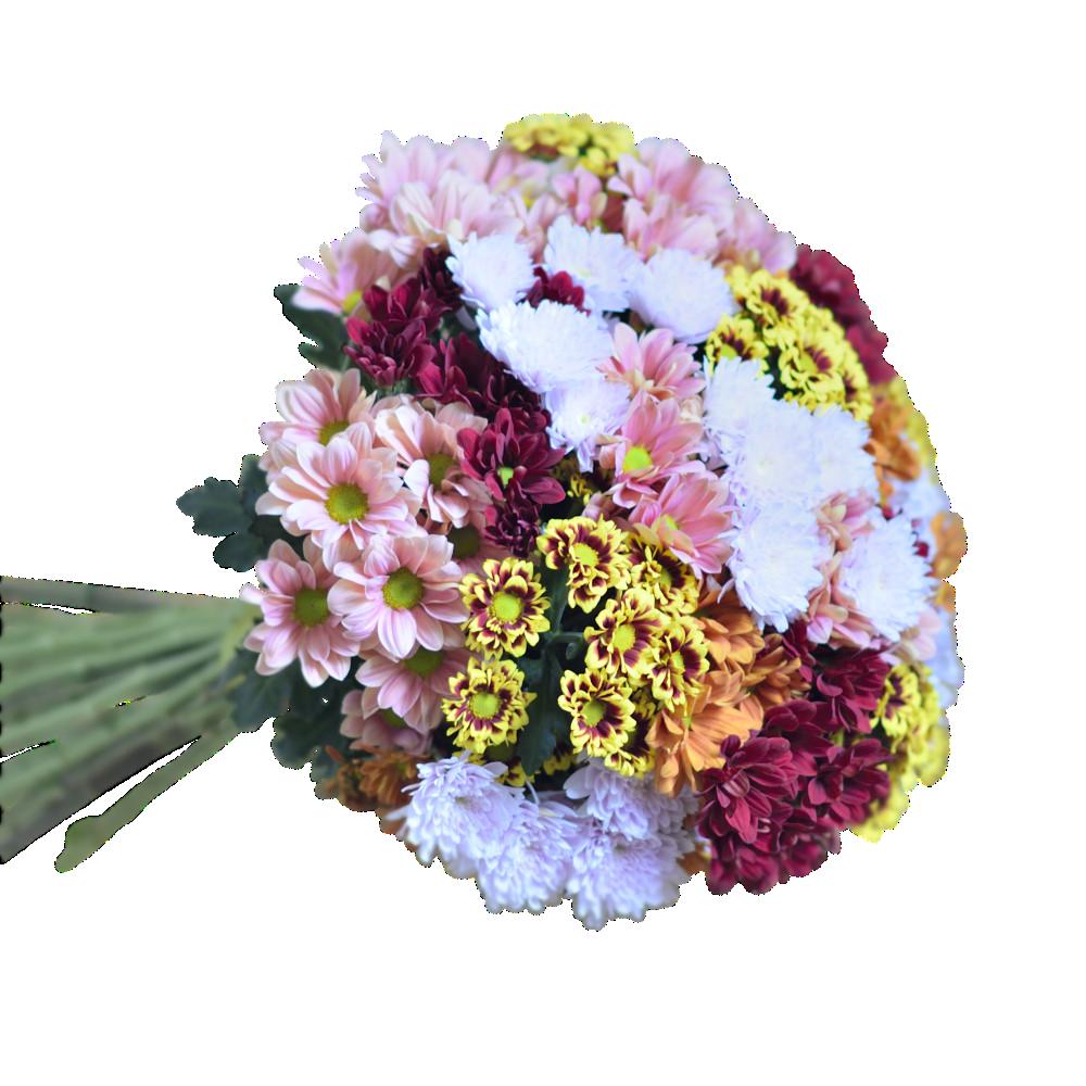 Pestrofarebné chryzantémy