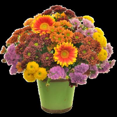 Chryzantémová kytica