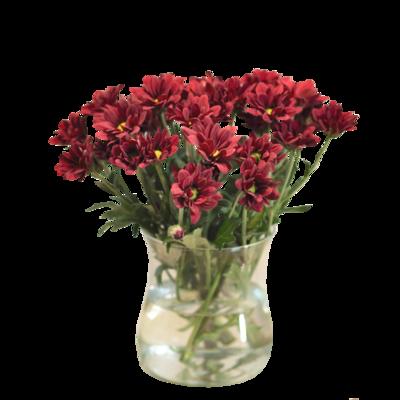 Červené chryzantémy