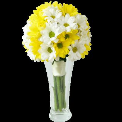 Chryzantéma biela a žltá