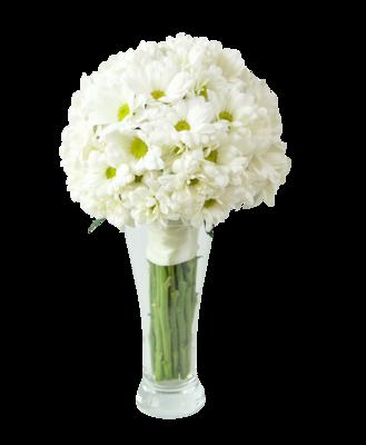 Chryzantéma biela