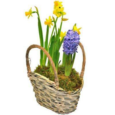 Prvé jarné kvety v košíku