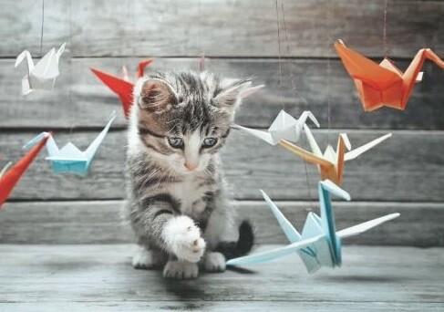 10 Karten mit Katzen-Motiv inkl. Couvert