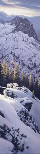 High Light - Mountain Goats