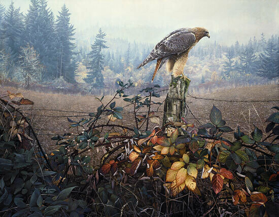 The Raptor's Watch - Red Tailed Hawk