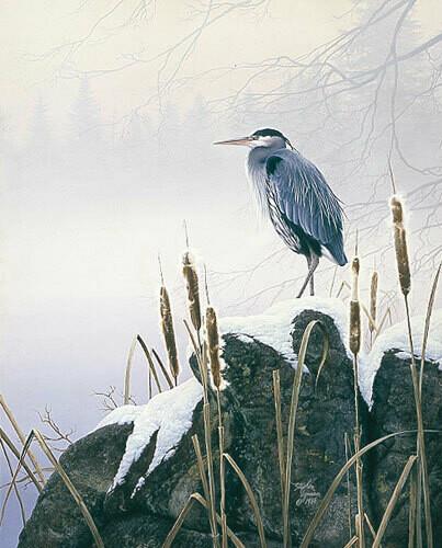 Morning Solitude - Heron