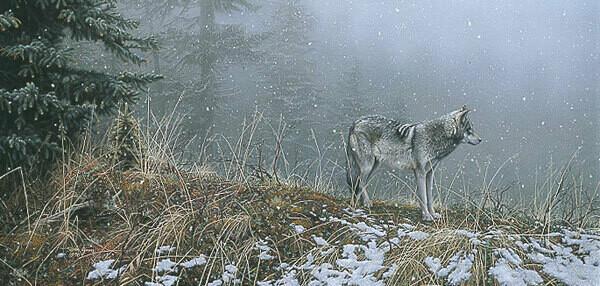 Silent Snows - Wolf