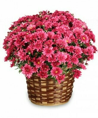 Daisy Mum Basket