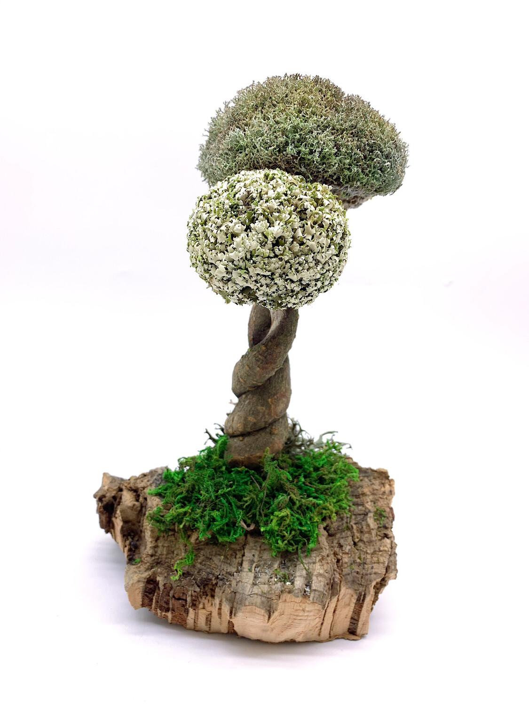Дерево из цетрарии